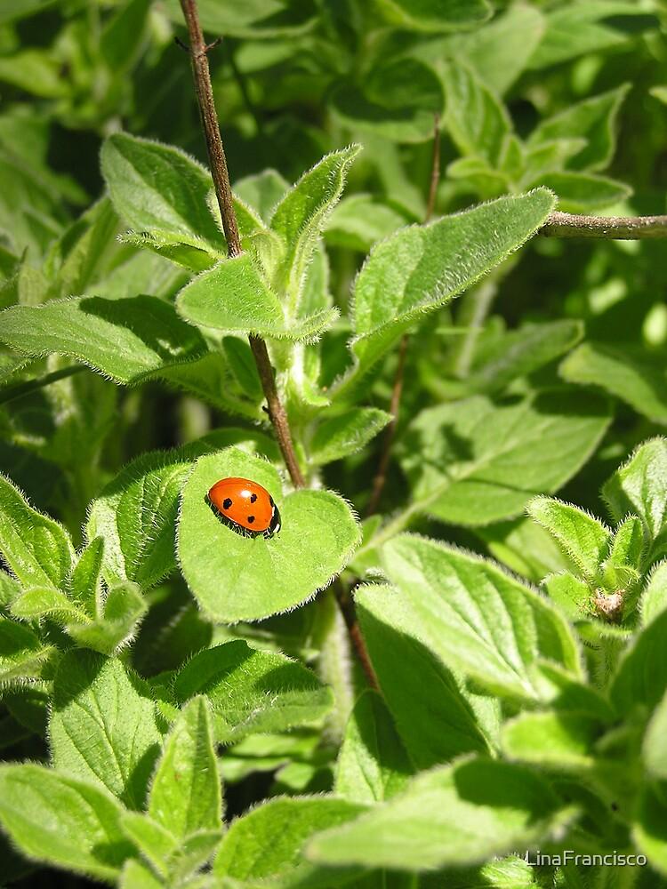 Oregano and Ladybug Rendez vous by LinaFrancisco