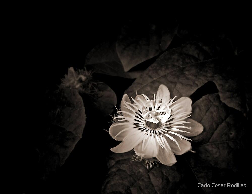 Flower Of Life by Carlo Cesar Rodillas