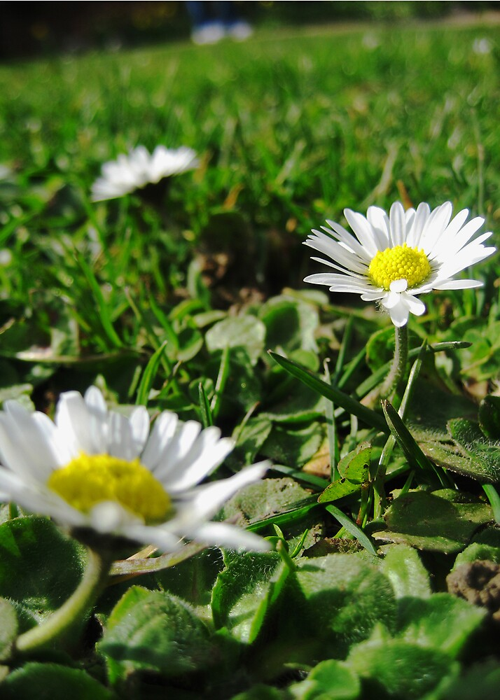 Small and White, Clean and Bright by silverfish