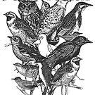 I Am Special - Birds by artlahdesigns