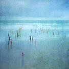 Polar Plunge by Jill Ferry