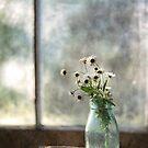 Daisy in a bottle by Jill Ferry