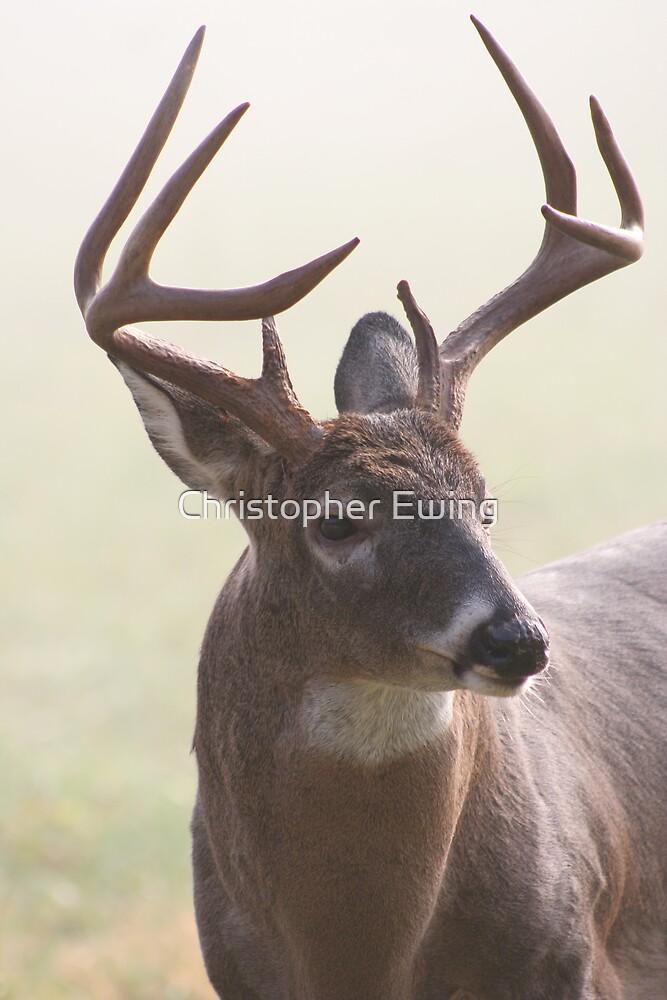 buck shot by Christopher  Ewing