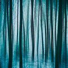 Winter Forest 6 by David Lichtneker