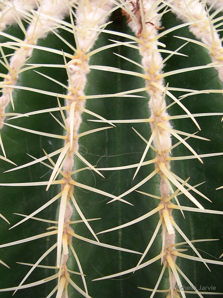 Close-Up cactus by Michelle Jarvie