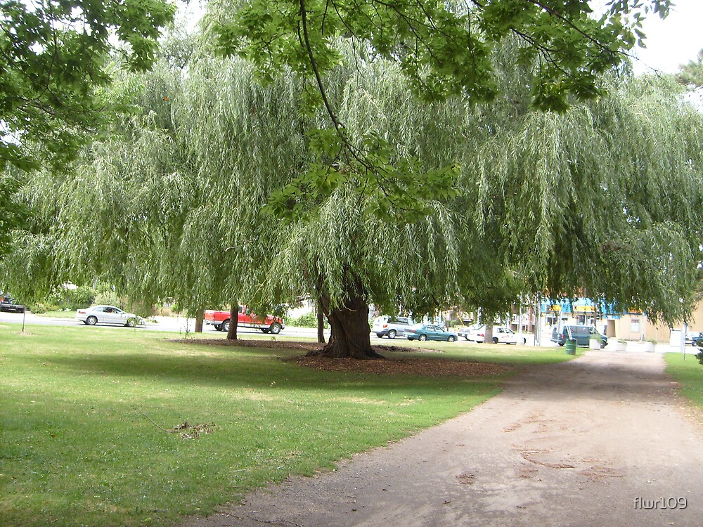 Weeping Willow by flwr109