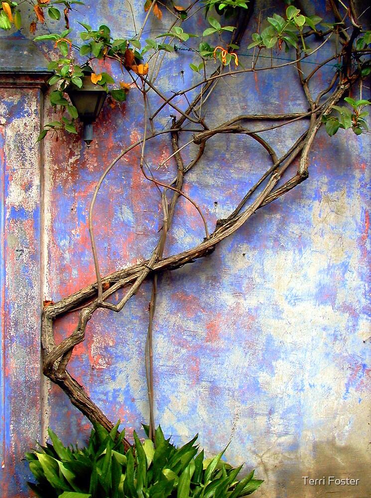 Honeysuckle Vine & Weathered Walls by Terri Foster