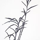 Bamboo by Jason Moses