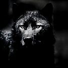 I Howl my pain at the Moon by Darren Bailey LRPS
