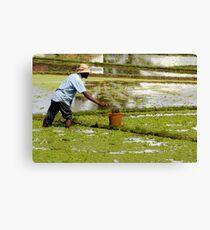 Water Farmer Canvas Print