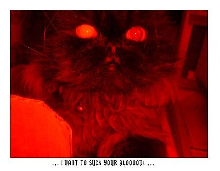 Cat Dracula by elizabethrose05
