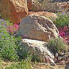 Desert Flora by Patty Lewis