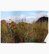 A Field of Wildflowers ~ Milkweeds   Poster