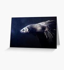 Betta Splendens Greeting Card