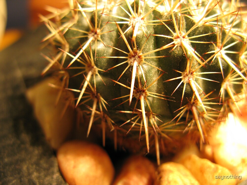 Cacti by saynothing