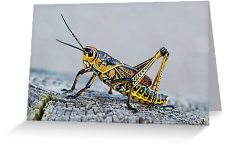 Painted Grasshopper by Bonnie T.  Barry
