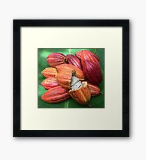 Fresh cacao pods Framed Print