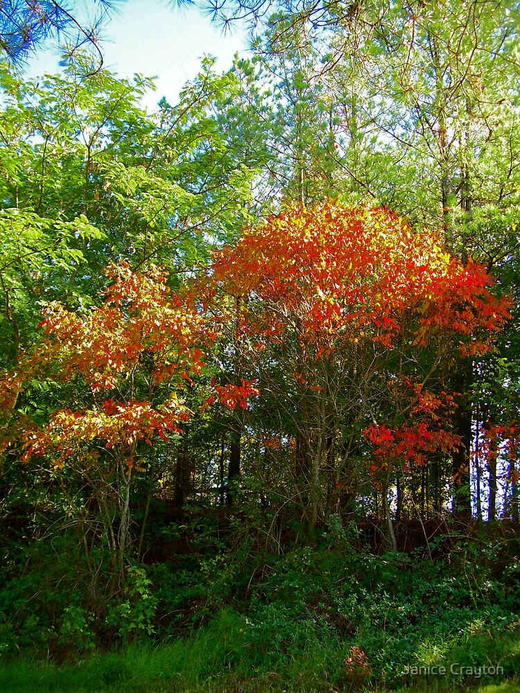 Fall Colors in Texas????????????? by Janice Crayton