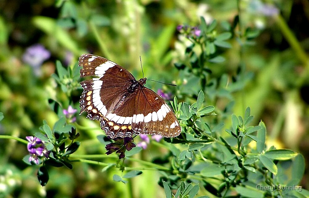 a beautiful butterfly by Cheryl Dunning