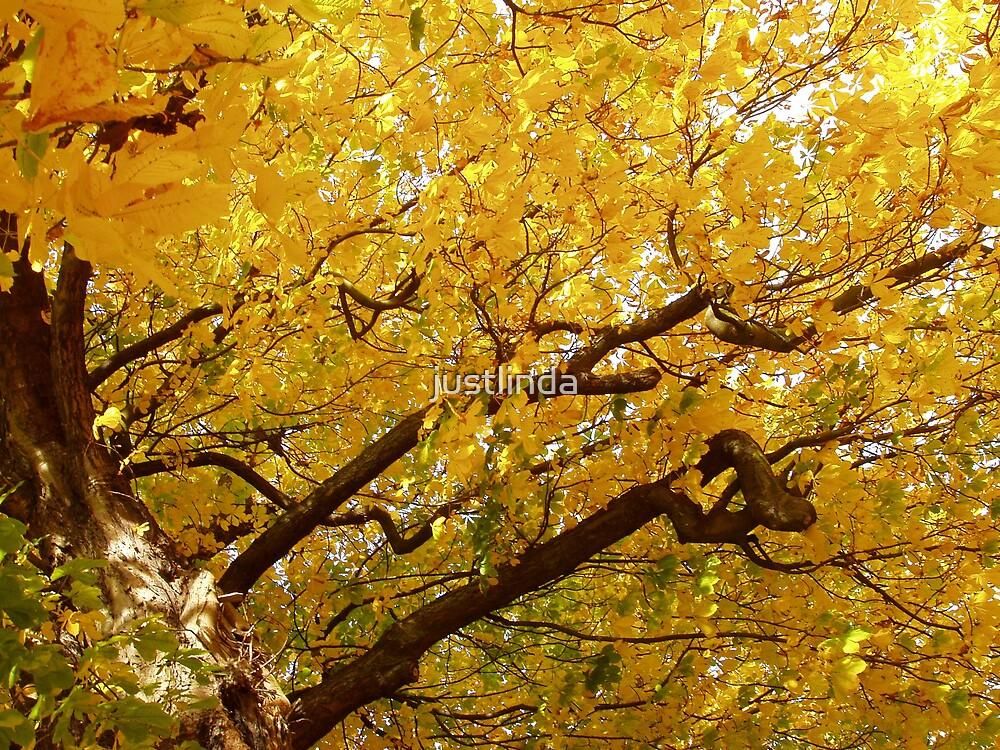 Golden by justlinda