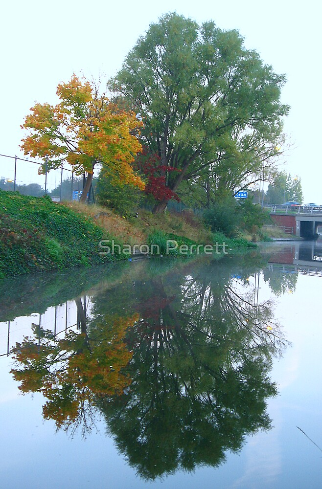 Reflective Morning by Sharon Perrett