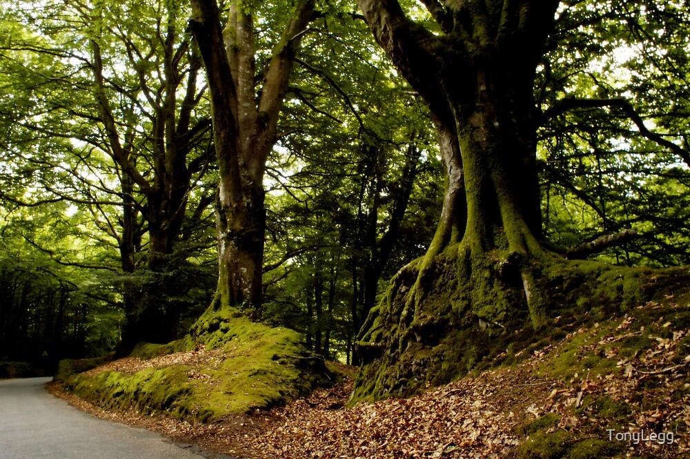 Exmoor  by TonyLegg