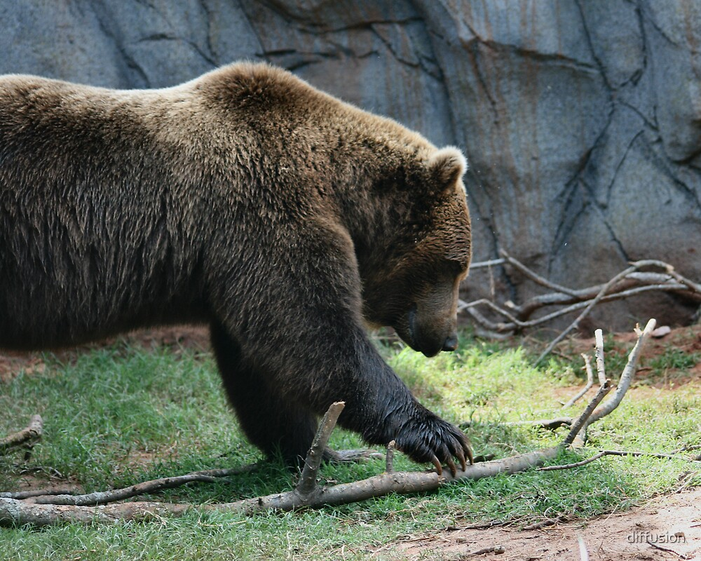 Grizzly by diffusion