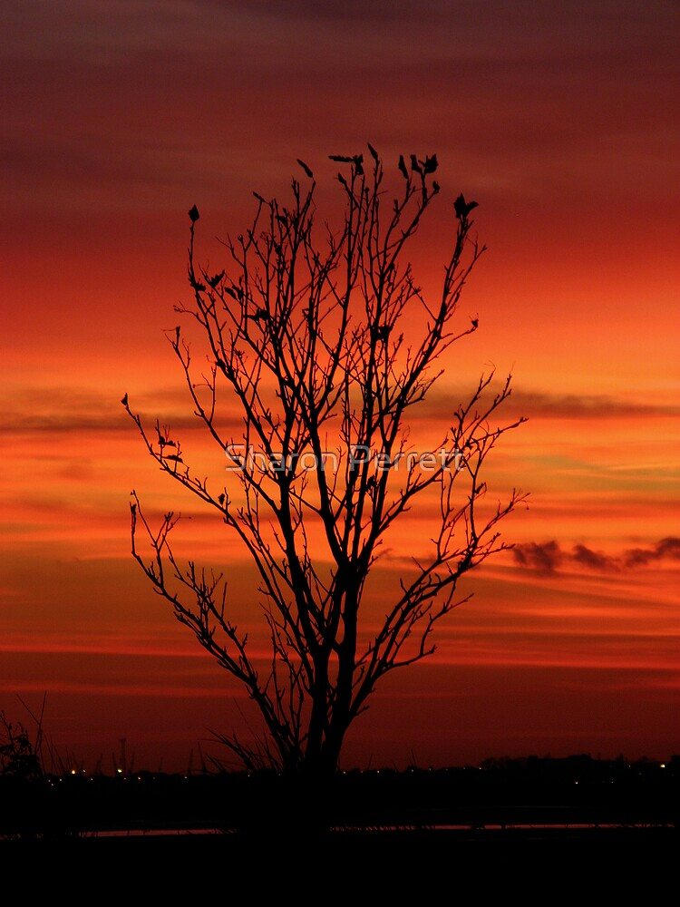 The silhouette by Sharon Perrett