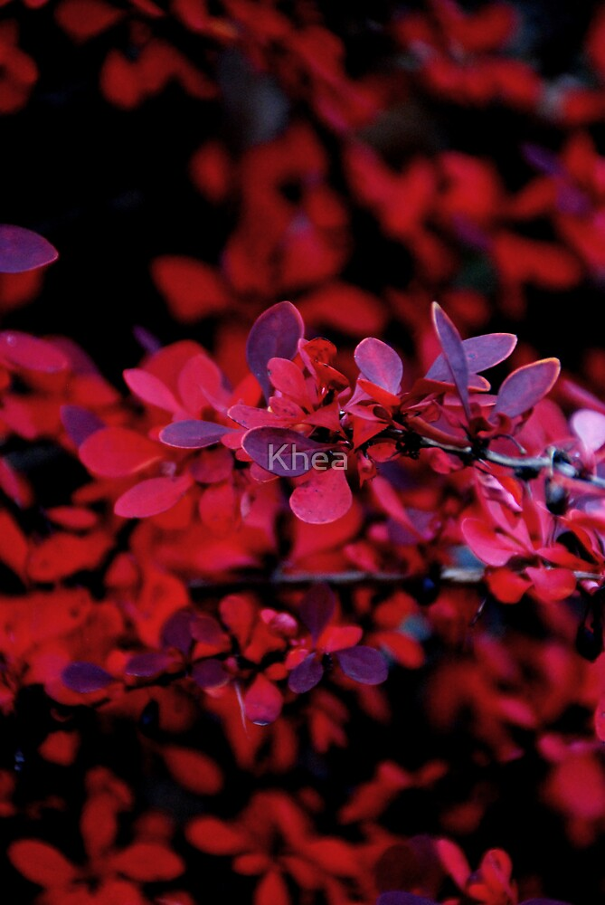 Autum Red by Khea