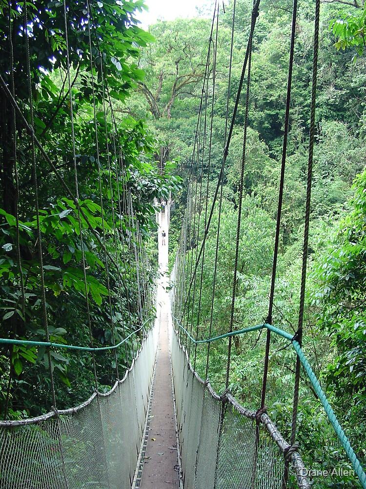 rope bridge by Diane Allen