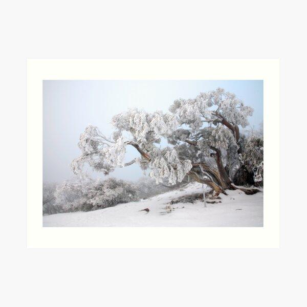 Snowbound Snowgum, Mt Feathertop, Australia Art Print