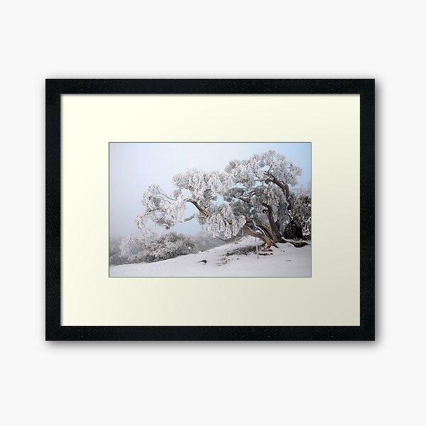 Snowbound Snowgum, Mt Feathertop, Australia Framed Art Print