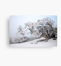 Snowbound Snowgum, Mt Feathertop, Australia Canvas Print