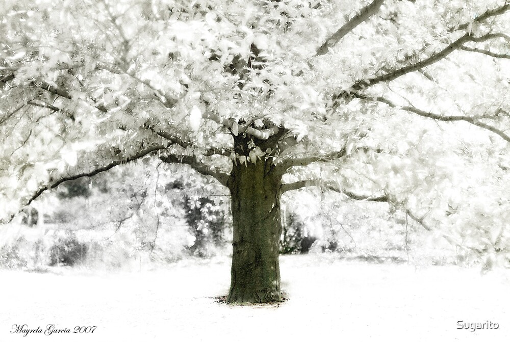 Snowy Tree by Sugarito