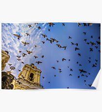 Avian Angels Poster
