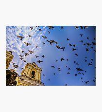 Avian Angels Photographic Print