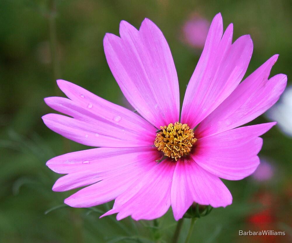Wild Flower by BarbaraWilliams