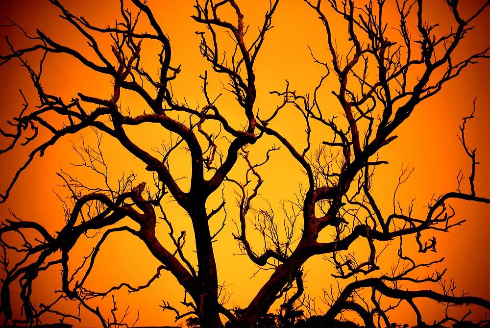 Tree by Princessbren2006