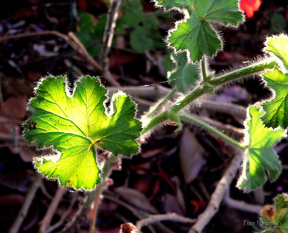 Leaf by Tom Newman