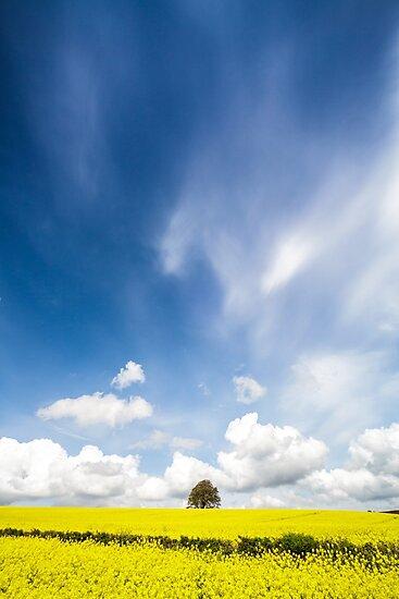 Oilseed Rape and Big Skies by Heidi Stewart