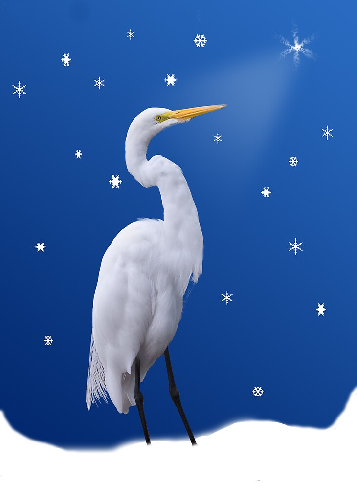 Great Egret Holiday Card by Delores Knowles