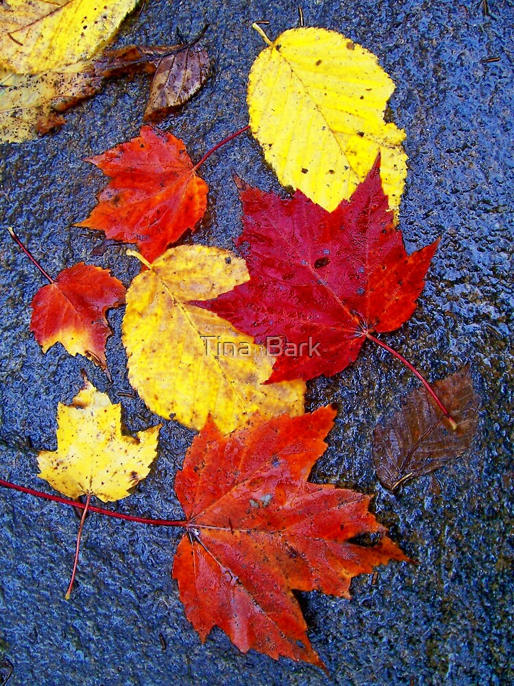 Autumn leaves by Tina  Bark