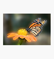 Monarch Butterfly closeup  Photographic Print