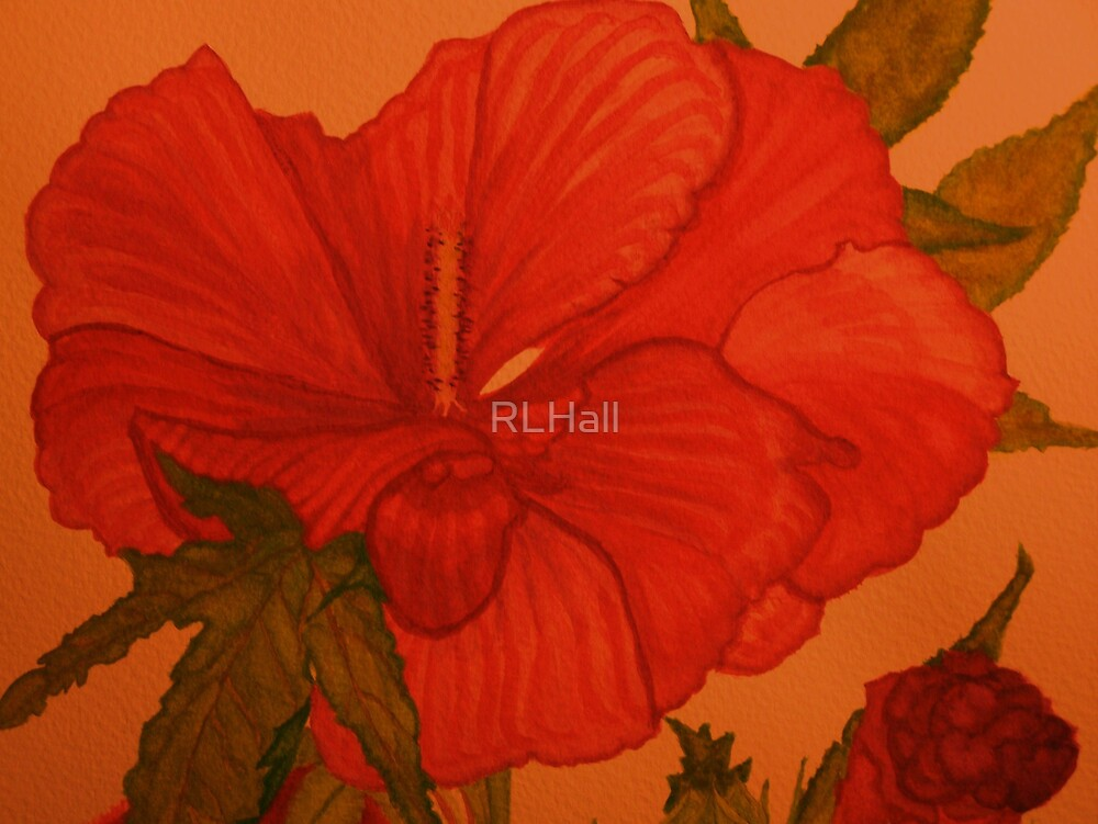 Red Hibiscus by RLHall