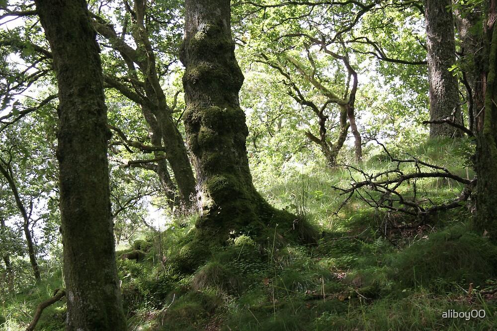Tree Trunks by aliboy00