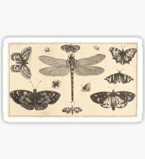 Wenceslaus Hollar Sticker