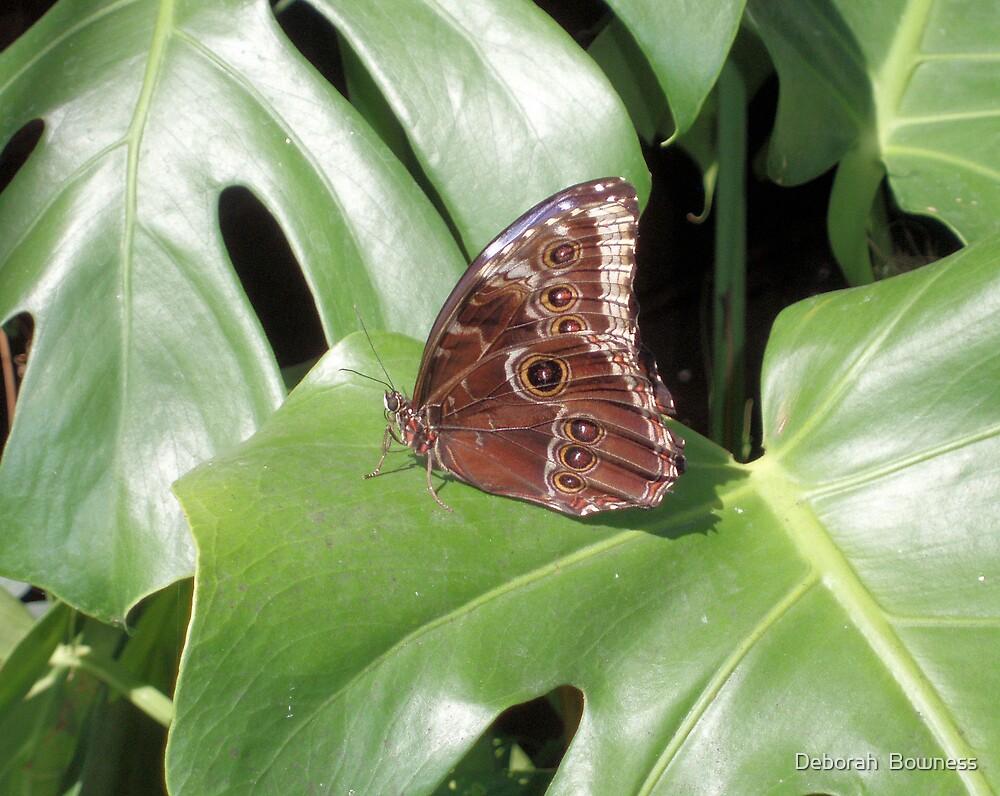 The Wings Have Eyes! by Deborah  Bowness