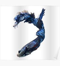 Fighter Fish Poster
