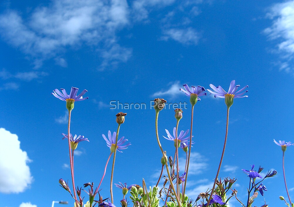 Pretty as a picture by Sharon Perrett