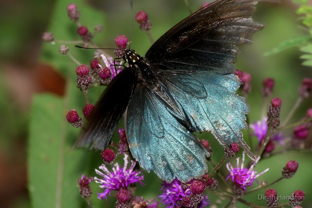 Tattered and Torn Butterfly by Dinah Hampton